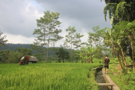 Hiking through rice terraces in Sidemen